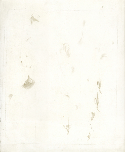Artist Winifred Knights: Sheet of Studies of Snowdrops, circa 1922