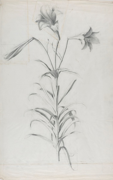 Marion-Adnams: Study-of-Lilies,-1930s
