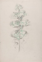 Artist Marion Adnams: Study of a variagated croton leaf
