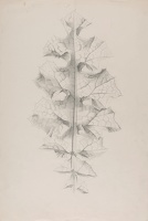 Artist Marion Adnams: Study of a Variegated Thistle Leaf (Silybum marianum), 1930s